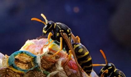 Три млн. пчели, отглеждани в апартамент