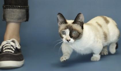 Най-малката котка в света