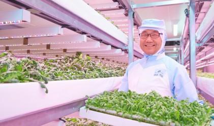 Тази ферма произвежда 12 000 марули дневно