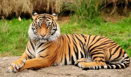 Тигри отказаха Рио Тинто от добив на диаманти в Индия