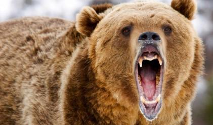 Прехвърлиха акции на Монбат за над 15 млн. лв.