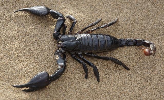 Затвориха уникален испански плаж заради нашествие на скорпиони