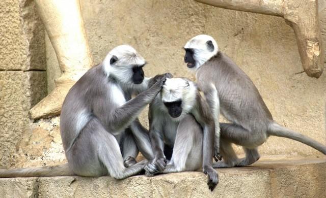5 места, които доказват, че живеем на планетата на маймуните