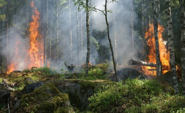 Борят се с голям пожар в Кресненското дефиле