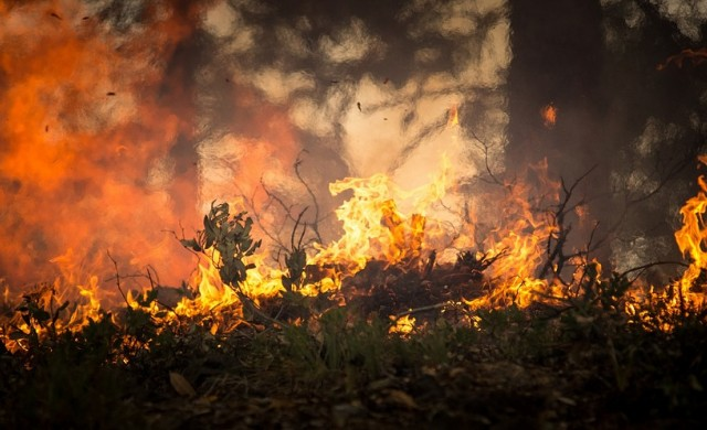 15 хил. дка са засегнатите площи от пожара в Кресненското дефиле