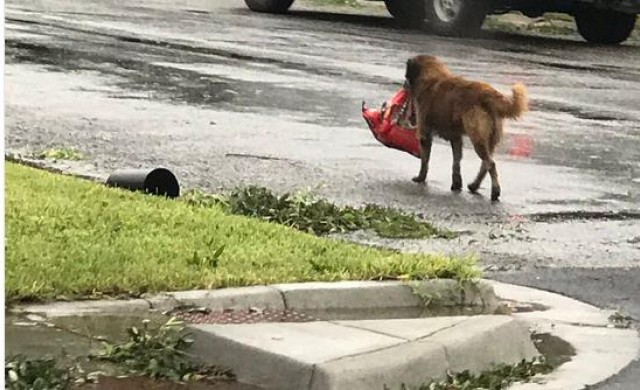 Куче стана необичаен символ на силната воля след урагана Харви