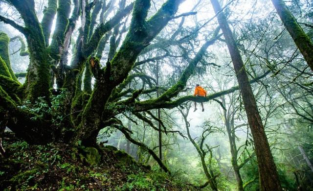 Човекът, който сади по едно дърво всеки ден