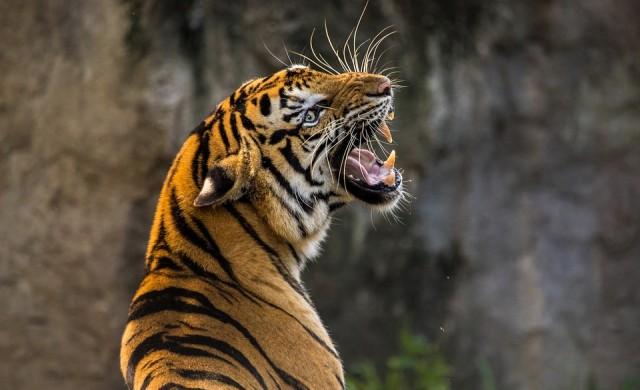 Първият нощен зоопарк отвори врати