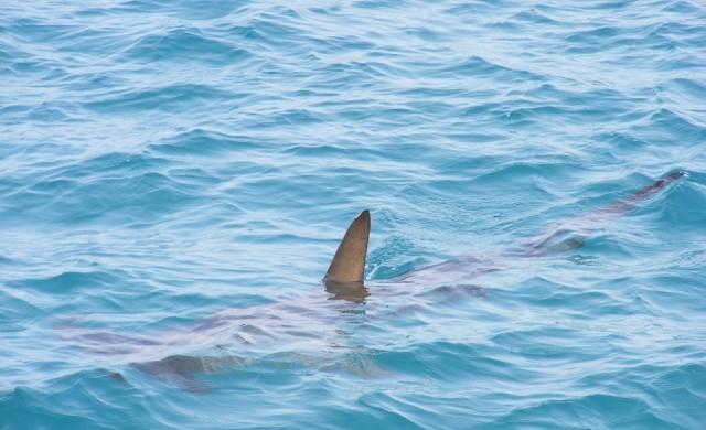 Учените откриха жива акула на 512 г.