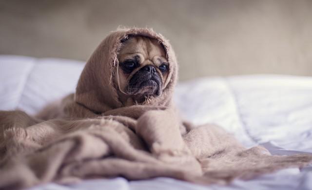 Да оценяваш хотели - работа-мечта, но не за хора, а за кучета