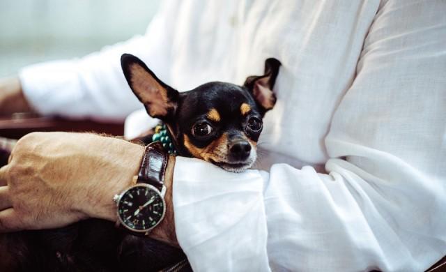 7 луксозни хотела по света, в които кучетата са на особена почит