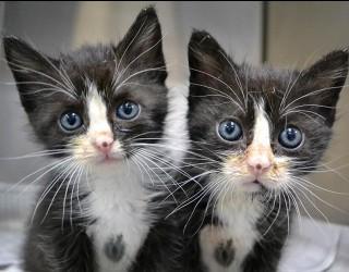 Китай започна да продава клонирани котки