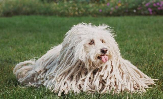 Кучето на Марк Закърбърг ни показва как трябва да носим маска (снимка)