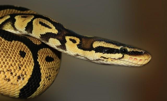 Жена намери змия в банята си