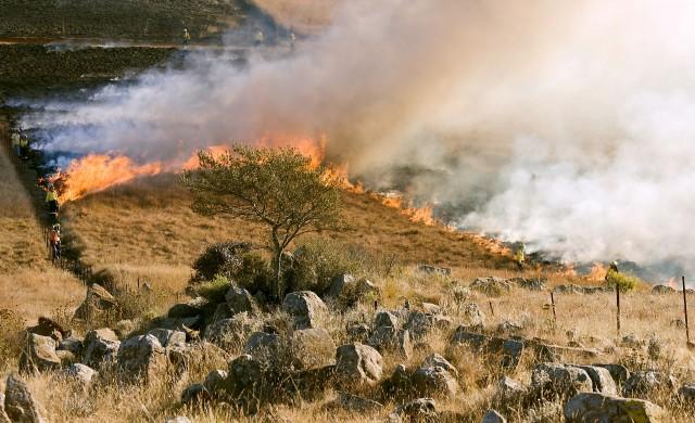 Северните предградия на Атина бяха евакуирани заради пожарите