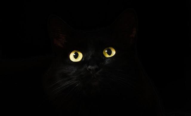 Черна котка спаси 83-годишна жена от сигурна смърт (снимки)