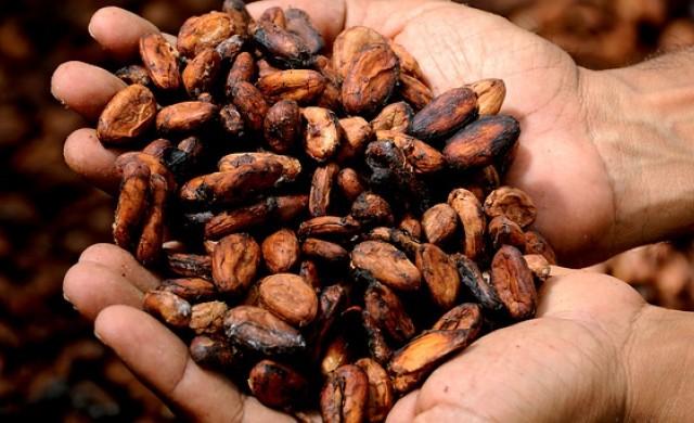 Какви ползи за здравето носи какаото?
