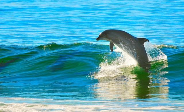 Колко делфини живеят в акваторията на Черно море?