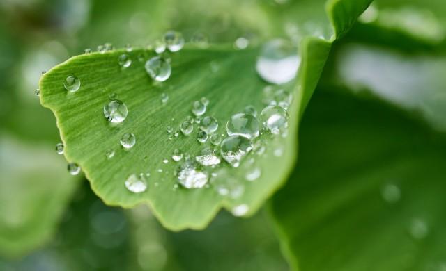 7 растения с изключителни здравословни ползи, които да отглеждате у дома