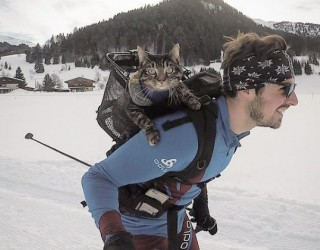 Един човек, една котка и много адреналин...