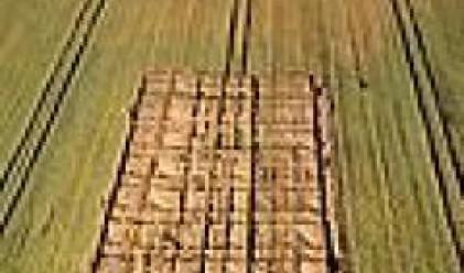 Пшеницата с нов рекорд на световните стокови пазари