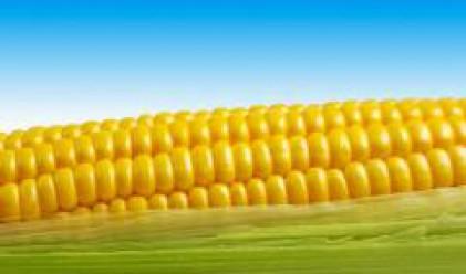 Сръбските фермери използват царевицата за отопление