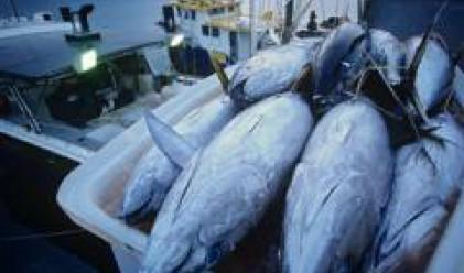 Обучават фирмите от рибния бранш как да кандидатстват за европейски проекти