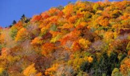 Общините, собственици на земи от горския фонд, учредяват асоциация