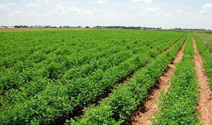Arable Land Up by 200,000 Ha in 7 Years