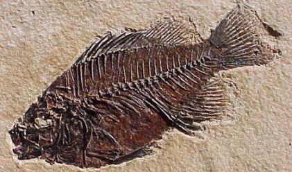 Праисторическа риба на АМ Люлин