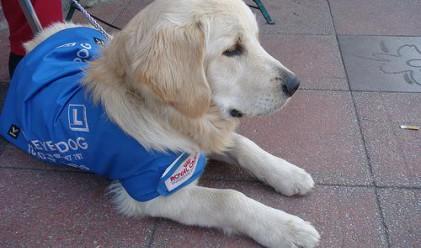 7 професии за кучета