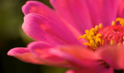 Румъния блокира вноса на цветя от Холандия