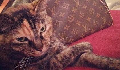 Богатите котки в Instagram