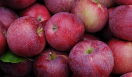 Некачествена и ябълковата реколта