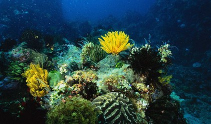 Бразилия загубила 80% от кораловите си рифове