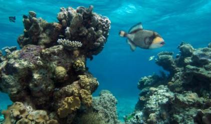 Всеки метър коралов риф защитава имущество за 47 000 долара