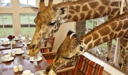 Най-добрите хотели за любителите на животни