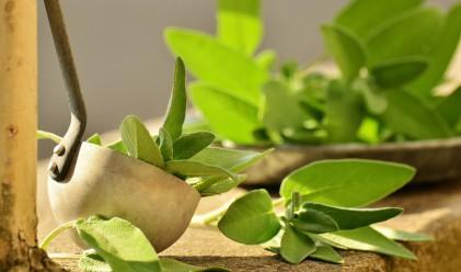 15 от най-добрите храни за плосък корем