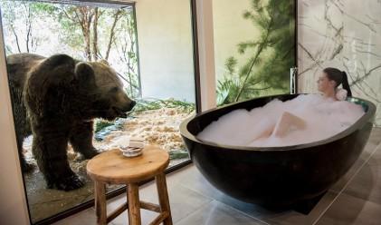 Jamala Wildlife Lodge – да вземеш вана пред погледа на мечка