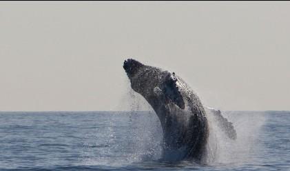 Затоплянето на климата върна китовете в Арктика