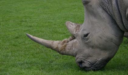 11 мита за животните, в които все още вярваме