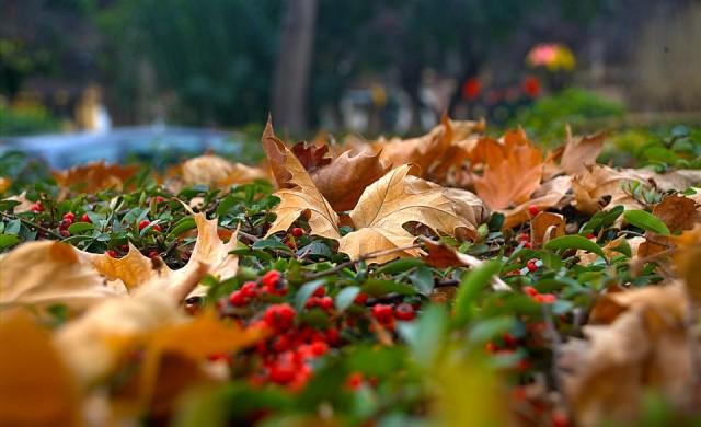7 начина да се справите с есенната депресия