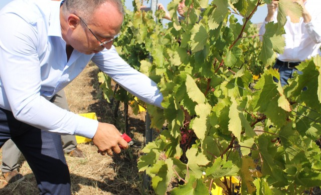 Вижте колко винарски изби има в България