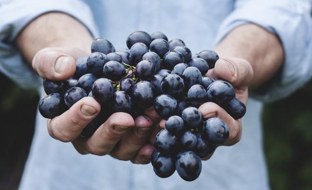 Невиждан интерес към покупката на грозде в страната