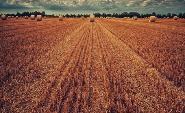 Как британските фермери компенсират отлива на българи и румънци?
