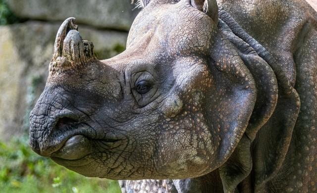 Посетители надраскаха имената си върху носорог в зоопарк