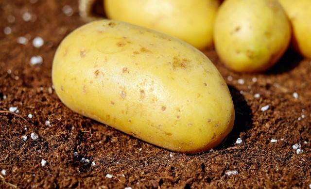 История на картофа или защо трябва да започнем да ядем буболечки