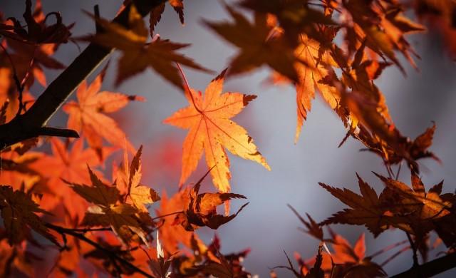 Чакат ни топъл октомври и по-мека от обичайното зима