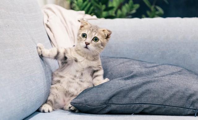 Котките обичат стопаните си, точно както кучетата