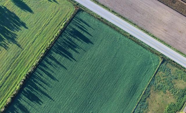 Средно с над 100 кг пшеница от декар по-малко спрямо 2019 г.